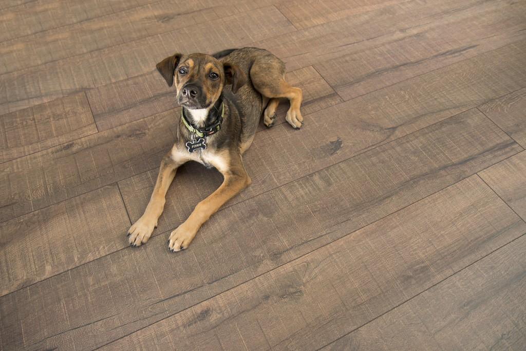 dog laying on cork flooring | Brooks Flooring Services Inc