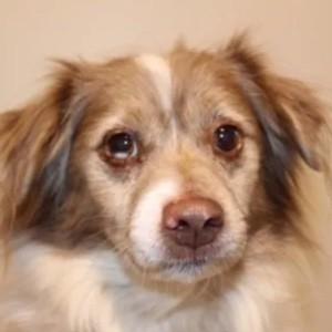 Frodo Sales Dog | Brooks Flooring Services Inc